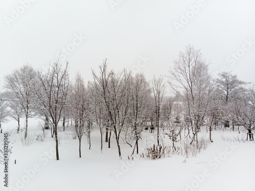 straight on view of a clump of Tree and bushes growing on snow covered grounds o Tapéta, Fotótapéta