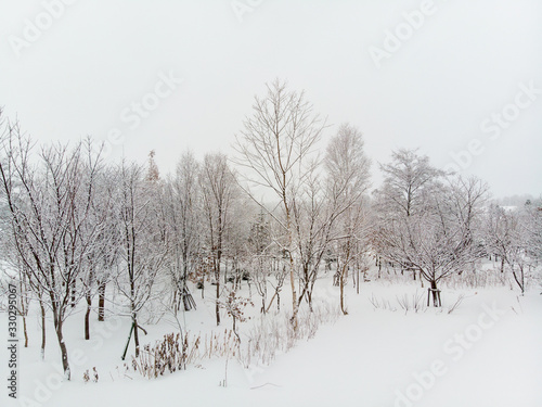 Vászonkép straight on view of a clump of Tree and bushes growing on snow covered grounds o
