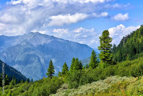 Alpine tree line and shrub tundra Wallpaper Mural
