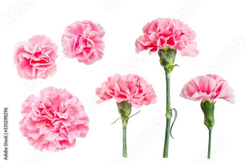 Obraz 花素材 ピンクのカーネーション - fototapety do salonu