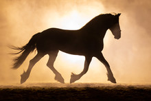 Silhouette Of A Trotting Frisi...