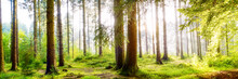 Wundervoller Wald Mit Großen ...