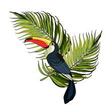 Vector Composition Of Toucan A...