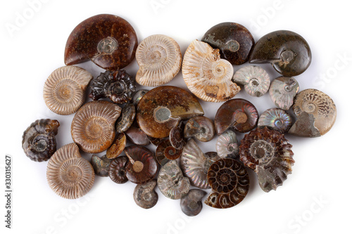 Photo Ammonites isolated on white. Different ammonite varieties