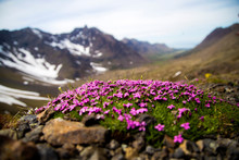 Flowers By The Mountains