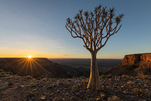 A Moody Sunrise Landscape Taken On Top Of The Arid And Stark Fish River Canyon, Namibia, With An Ancient Quiver Tree In The Foreground, And A Golden Sunburst Against A Blue Sky On The Horizon.