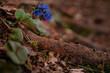 Farbenfrohe Blume am Boden des Waldes