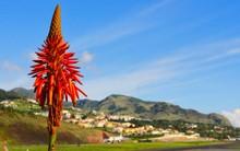 Sunny Madeira Landscape Featur...
