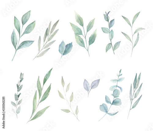 Obraz Floral greenery set with eucalyptus branch. Hand drawn botanical  illustration on white background - fototapety do salonu