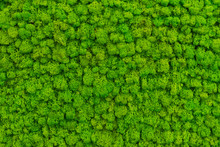 Green Moss As A Background Gr...