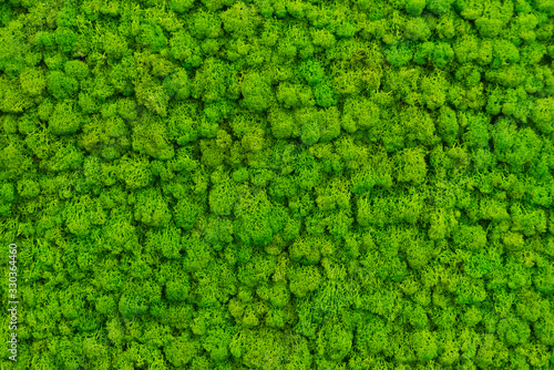 Fotografia, Obraz Green moss as a background grows in the interior of the office on the wall