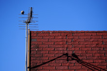 Bird On The Antenna On The Red...