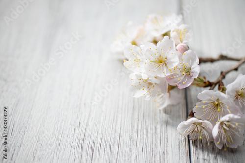 Obraz 満開の桜 - fototapety do salonu