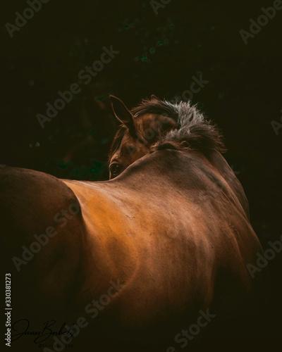 Fototapeta horse on a black background obraz