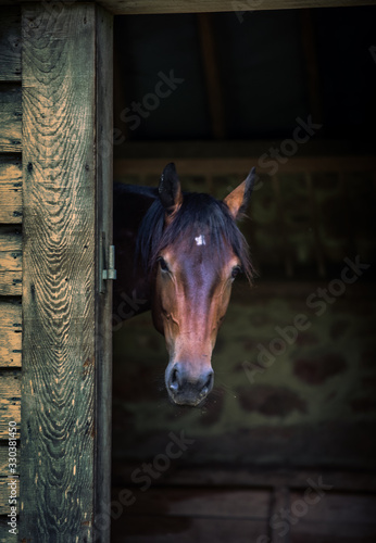 Canvas Print horse in stable