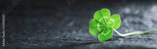 Obraz Bright green good luck four leaf clover. - fototapety do salonu