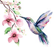 canvas print picture - Flying hummingbird, watercolor illustration, tropical bird and flower isolated on white background, exotic, wild life clip art. Hand painting.