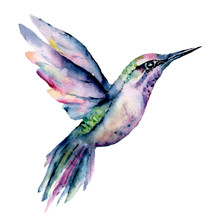Flying Hummingbird, Watercolor...