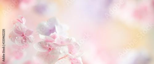 Obraz na plátně Spring or summer floral composition made of fresh hydrangea flowers on light pastel background