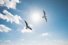 空を舞う2羽のカモメ