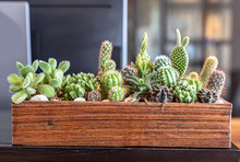 Many Small Cactus In Different...