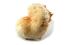 Honey Agaric Mushroom (Pholiot...