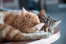 Sleeping Cats At Sirkeci Train...