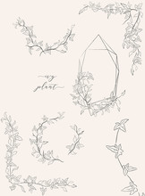 Collection Of Line Drawing Ivy Plant Vector Floral Wreaths, Geometric Frame, Hand Drawn Corners With Branches, Leaves, Plants, Herbs. Botanical Illustration. Leaf Logo. Wedding Invitation, Monogram
