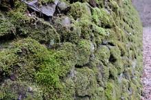Japanese Moss Growing On Rock ...
