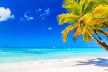 Palm Tree On The Caribbean Tro...