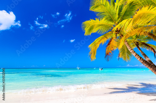 Fotografia Palm tree on the caribbean tropical beach