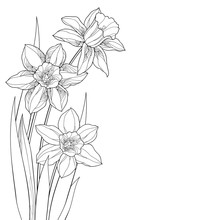 Corner Bouquet With Outline Narcissus Or Daffodil Flower And Leaves In Black Isolated On White Background.