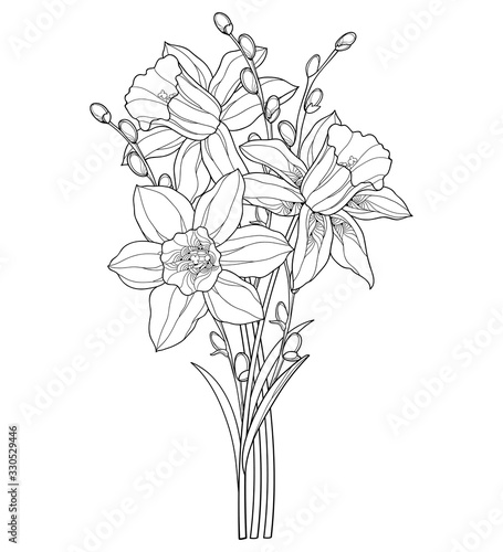 Bouquet with outline narcissus or daffodil flower and willow branch in black isolated on white background Tapéta, Fotótapéta