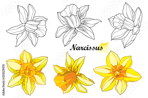 Photo Set with outline narcissus or daffodil flower in black and orange yellow isolated on white background