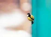 Portrait Funny Little Bird Chi...