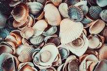 Mixed Colorful Sea Shells As B...