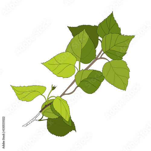 SGreen twig of birch with young leaves, outline cartoon drawing sketch, escape with foliage Wallpaper Mural