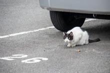 自動車の下の猫