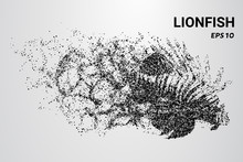 Lion Fish From The Particles. ...