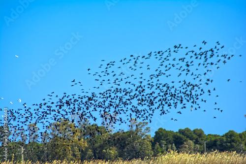 Photo Pájaros en el cielo.