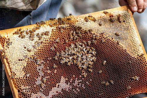 Photo The beekeeper examines bees in honeycombs.