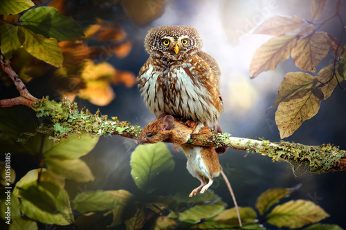 Photo Small owl in deep magic forest