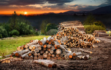 Forest Pine And Spruce Trees. Log Trunks Pile,  The Logging Timber Wood Industry.