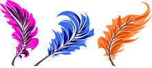Pink, Blue, Orange Feather In ...