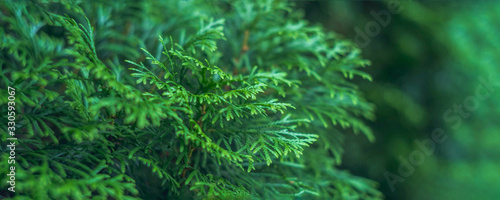 Fotomural cypress branch abstract texture