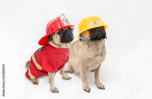 Cute pug dogs wearing a fire fighter hat and coat, and a pug wearing a construct Fototapete