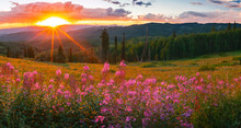 Wildflower Sunset Panorama In ...