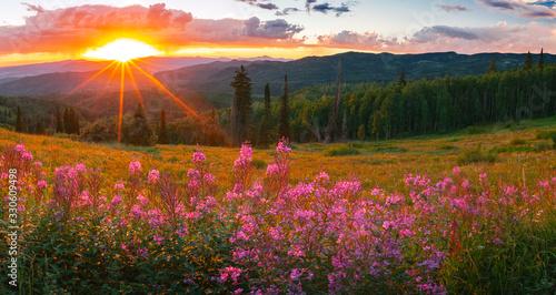Fotografía wildflower sunset panorama in the Colorado Rockies, USA.