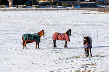 Aspen, Colorado Rocky Mountains Ranch Field Farm Pasture Covered In Snow After Winter With Horses In Blankets