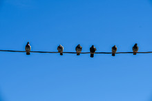 Pigeons On A Wire With A Blue Sky